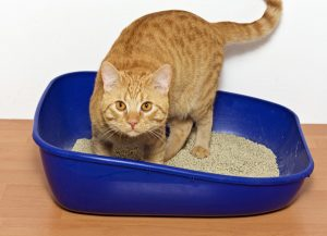 cat litter box 300x217 - Out of the Bag and into the House