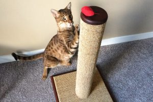 scratching post 300x200 - Out of the Bag and into the House