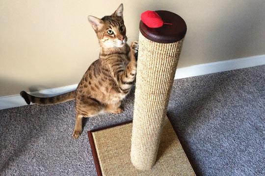 Target cat scratching post