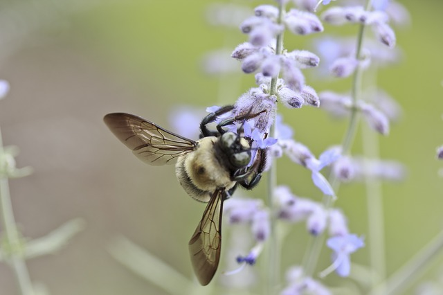 bee - Treating Allergies – Home Style