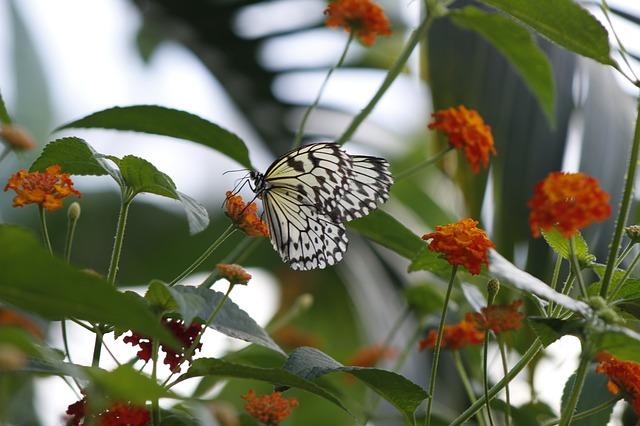 butterfly-in-garden