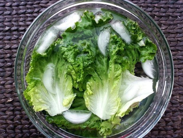 lettuce ice bath revitalize - Veggie Vitality: Preserving the freshness of our precious produce