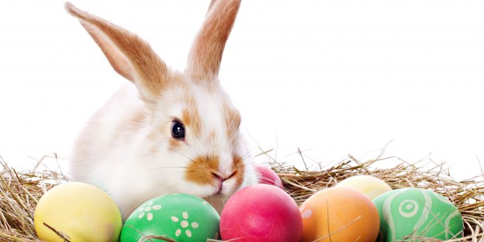 easter-bunny-easter-eggs-nest-rocking-mama