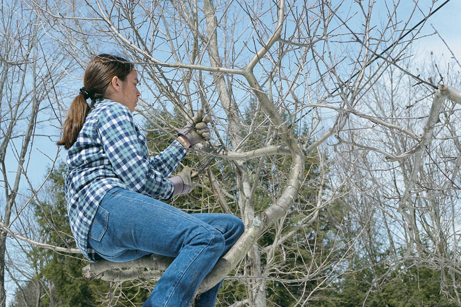 sitting-in-tree-winter-time-pruning-trees