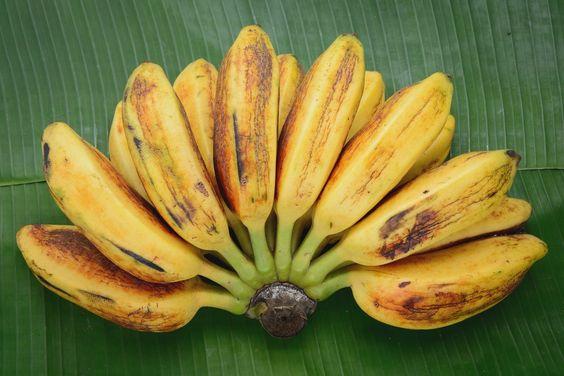 sababanana - How to make banana lumpia (turon) recipe, with how to wrap lumpia
